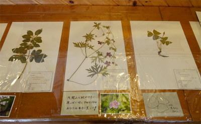 hyouhontenji03.jpg